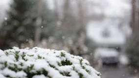 Snow falling. On a winter snow storm day, with green tree in the foreground stock video footage