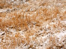 Prairie Snowfall Background Royalty Free Stock Photo