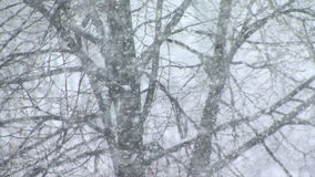 Snow falls in a forest stock footage