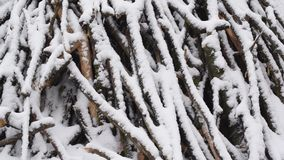 Snow falls in slow motion on background of heap of tree branches and twigs. Covered with heaps of snow stock video