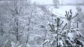 Snow falls on spruce in vicinity of road. Slow motion stock video footage