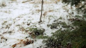 Snow falls from the tree branches stock video footage