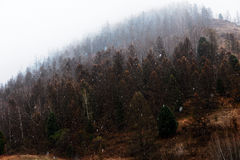 Snow falls on the trees. In the mountains Stock Photos
