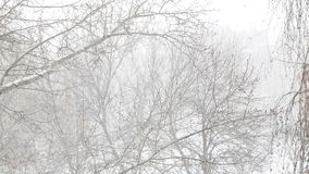 Snow falls on the wind against swinging tree branches stock footage