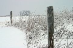 Snow Fence Posts. Snow covered fence posts with some weeds and trees around it Stock Image