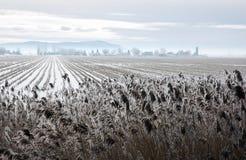 Snow field Stock Photos