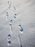 Snow field. Set of footprints in the snow receding into the distance Stock Photos