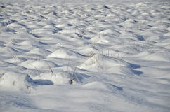 Snow field background. With dry grass threads Stock Photo