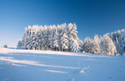 Snow field and forest under blue sky with crescent Royalty Free Stock Photography