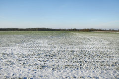 Snow on the field. Stock Images
