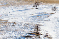 Snow field trees Stock Image