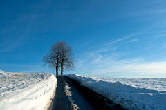 Snow fields Stock Images