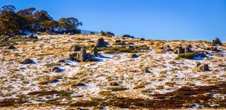 Snow at Perisher Blue on a very sunny day royalty free stock images