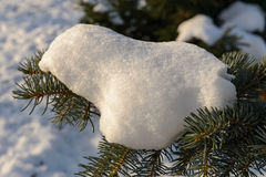 Snow on a Fir Branch Royalty Free Stock Photos