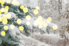 Snow on fir branches Royalty Free Stock Image