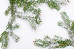 Snow fir tree branches under snowfall. framework for text Stock Photos