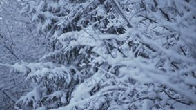 Snow on fir trees. Snow winter trees. Snow on fir trees. Snow winter tree forest stock video footage