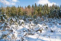 Winter forest snow trees background Royalty Free Stock Image