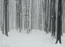 Snow flakes falling in cold winter forest Royalty Free Stock Photos