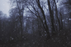 Snow Storm In A Forest With Fog In Winter Evening Stock