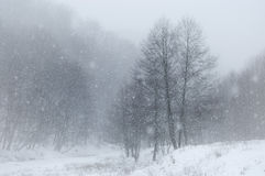 Snow flakes falling over landscape in winter Royalty Free Stock Image