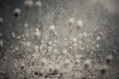Snow flakes falling in winter Royalty Free Stock Photos