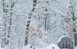 Snow Flocked Forest and Shed. Winter forest and shed with fresh snow, Yankee Springs State Park, Michigan, USA Stock Photos