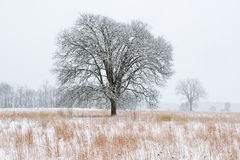 Snow Flocked Meadow Stock Image