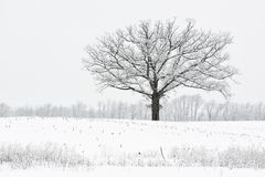 Snow Flocked Trees Stock Photography