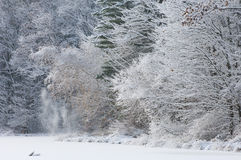 Snow Flocked Trees Royalty Free Stock Images