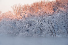 Snow Flocked Trees, Kalamazoo River Stock Photo