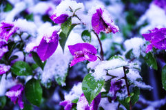 Snow flower Stock Photography