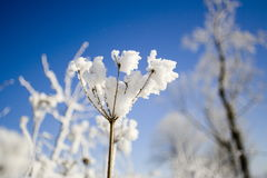 Snow flower. Winter flower Stock Images