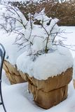 Snow flower pots Royalty Free Stock Photography