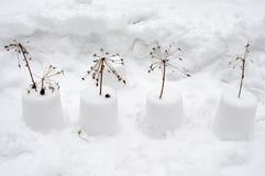 Snow flowers Stock Photo