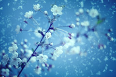 Snow and flowers. Royalty Free Stock Image