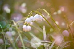 Snow flowers Stock Image