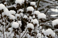 Snow flowers after a winter snowfall royalty free stock photos