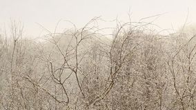 Snow-flurry on a trees stock footage