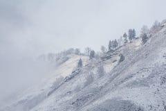 Snow fog Stock Photography