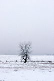 Snow and Fog Stock Photography