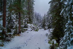 Snow & fog in forest, pathway. Foggy day on the mountain in the Alps Stock Photography