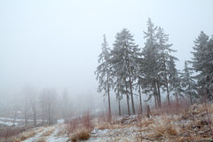 Snow and fog in Harz mountains Stock Photography