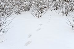 Snow and footprint Stock Images