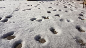 Snow. Footsteps cat winter white grey Stock Photo