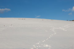 Snow and footsteps. A hill covered by snow with some footsteps lines, under a blue sky with some white clouds Stock Photo