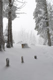 Snow into the forest. Dreamy view of the forest covered by snow Stock Images