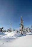 Snow forest Stock Images