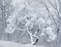 The snow in the forest. Stock Photography