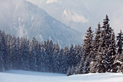 Snow forest Royalty Free Stock Photos